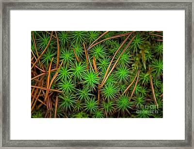 The Scent Of Pine Forest IIi Framed Print by Veikko Suikkanen