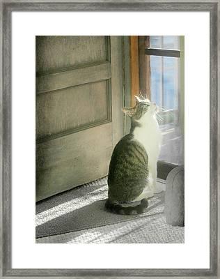 The Screen Door Cat Framed Print by Diana Angstadt
