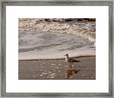 The Sea Gull Strole Framed Print by Melissa Wyatt