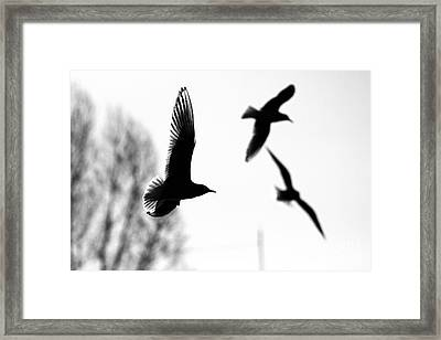 The Seagull Flying  Framed Print by Odon Czintos