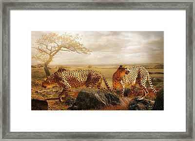 The Search For Tomorrow Framed Print by Trudi Simmonds