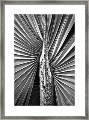 The Second Half Framed Print by Ben and Raisa Gertsberg