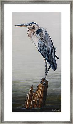 The Sentinel - Portrait Of A Great Blue Heron Framed Print by Rob Dreyer AFC