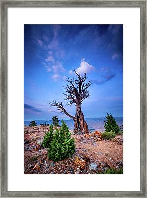 The Sentinel Still Stands Framed Print by Dan Holmes