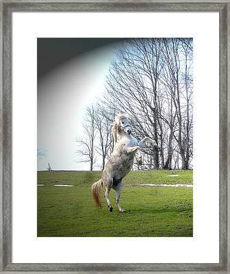 The Stallion Dancer Framed Print by Patricia Keller