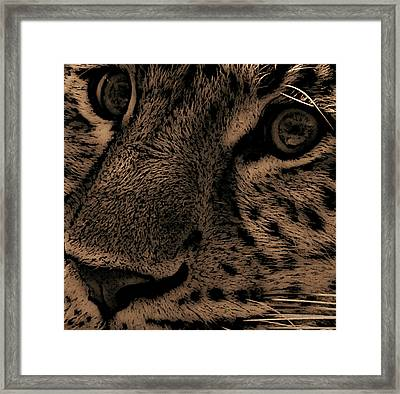 The Stare Framed Print by Martin Newman