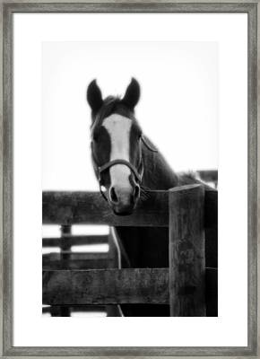 The Steed Framed Print by Wayne Stacy
