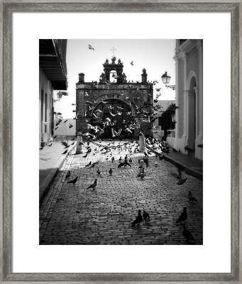 The Street Pigeons Framed Print by Perry Webster