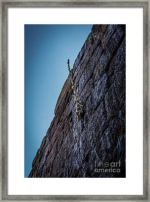 The Struggle To Survive Framed Print by David March