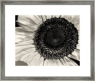 The Sunflower Framed Print by Michael Wade