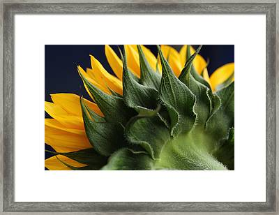 The Sun's Bonnet Framed Print by Connie Handscomb