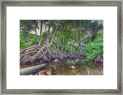 The Swamp Framed Print by Nadia Sanowar