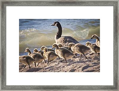 The Swimming Lesson Framed Print by Albert Seger