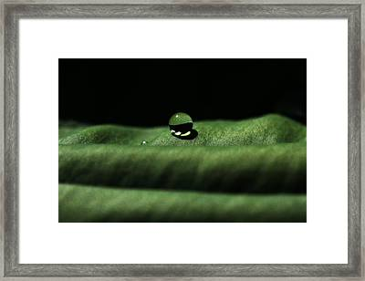 The Tao Of Raindrop Framed Print by Connie Handscomb