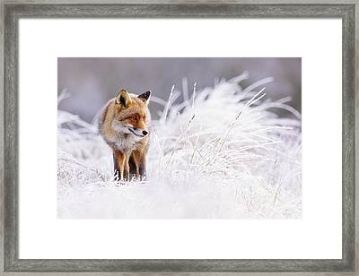 The Thinker - Red Fox In A Wintery Landscape Framed Print by Roeselien Raimond