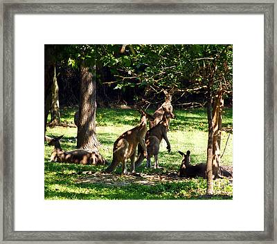 The Three Musketeers Framed Print by Patricia Griffin Brett
