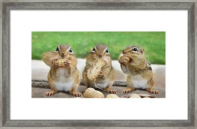 The Three Stooges Framed Print by Lori Deiter