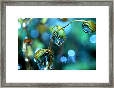 The Threesome Framed Print by Sharon Johnstone