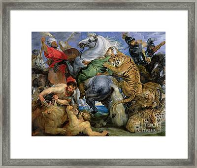 The Tiger Hunt Framed Print by Rubens