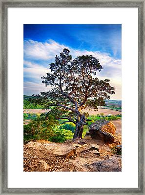 The Tree Framed Print by Keith Homan