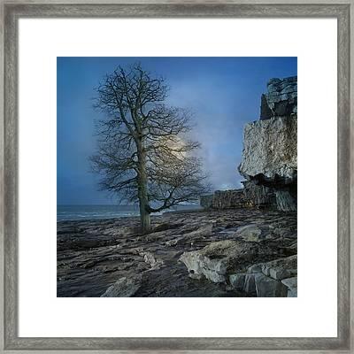 The Tree Of Inis Mor Framed Print by Betsy C Knapp