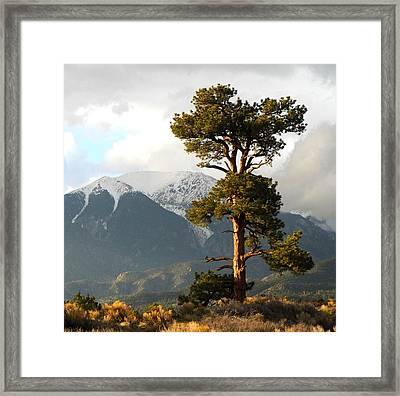 The Tree Framed Print by Ryan Scholl