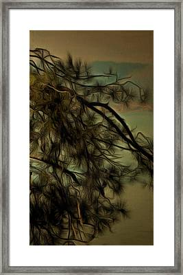 The Tree Triptych 3 Framed Print by Dorothy Berry-Lound