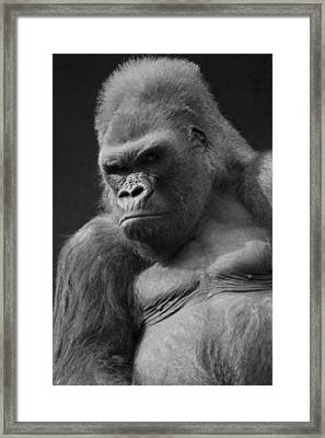 The Troop Leader Framed Print by Brad Scott