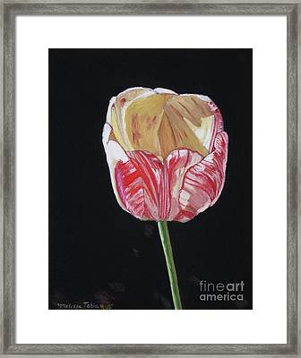 The Tulip Framed Print by Melissa Tobia