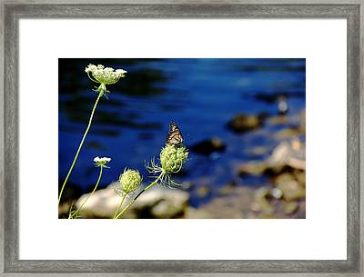 The Viceroy And The Queen Framed Print by Debbie Oppermann