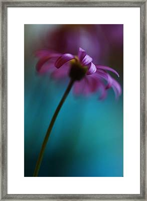The View Above Framed Print by Kym Clarke