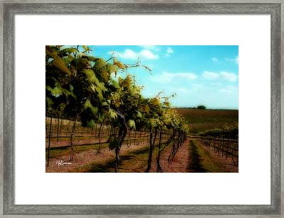 The Vineyard Framed Print by Jeff Swanson