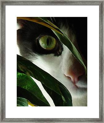 The  Voyeur Framed Print by Lynn Andrews
