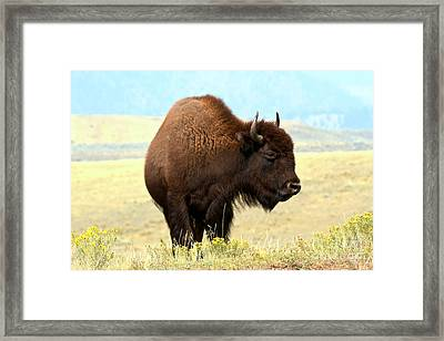 The Wanderer Framed Print by Adam Jewell