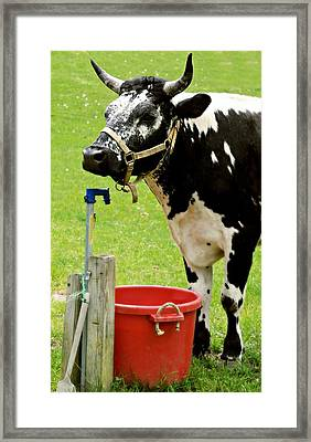 The Water Bucket Framed Print by Diana Angstadt