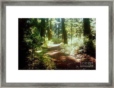 The Way To Go Framed Print by Shasta Eone