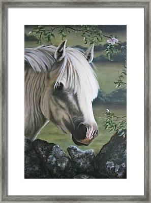 The Welshman Framed Print by Beth Munnings