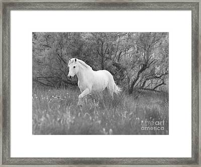The White Horse In The Forest Framed Print by Carol Walker