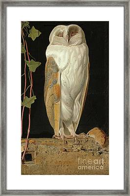 The White Owl Framed Print by William J Webbe