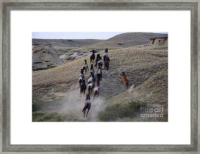 The Wild Bunch 2 Framed Print by Bob Christopher
