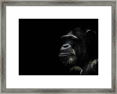 The Wise Framed Print by Martin Newman