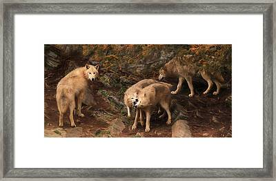 The Wolf Pack Framed Print by Lori Deiter