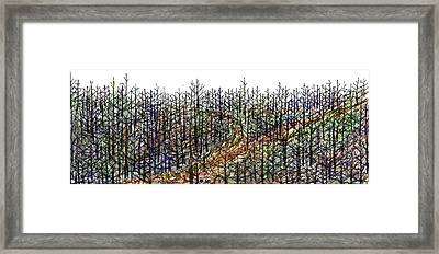 The Woods Framed Print by Tex Norman