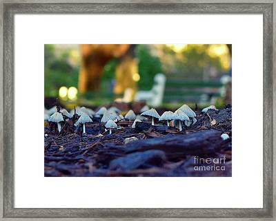 The World Behind The Bench Framed Print by Sarah Labadie