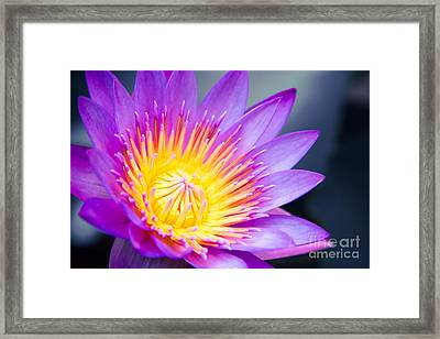 The World Is A Garden Framed Print by Sharon Mau