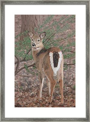 The Yearling Framed Print by Sandra Chase