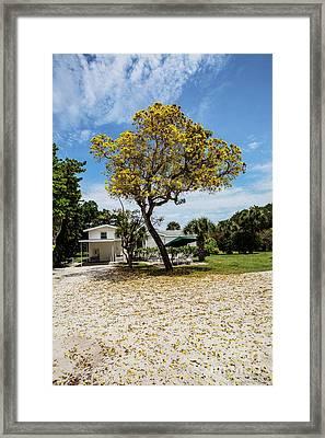 The Yellow Tree Framed Print by Scott Pellegrin