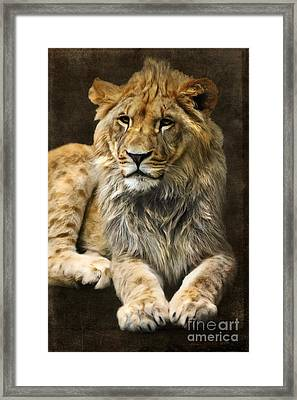 The Young Lion Framed Print by Angela Doelling AD DESIGN Photo and PhotoArt