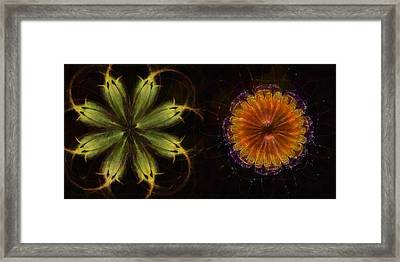 Theophagous Undressed Flowers  Id 16165-050825-25060 Framed Print by S Lurk
