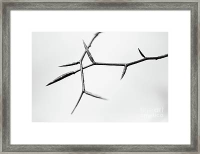 Thin Framed Print by Gabriela Insuratelu
